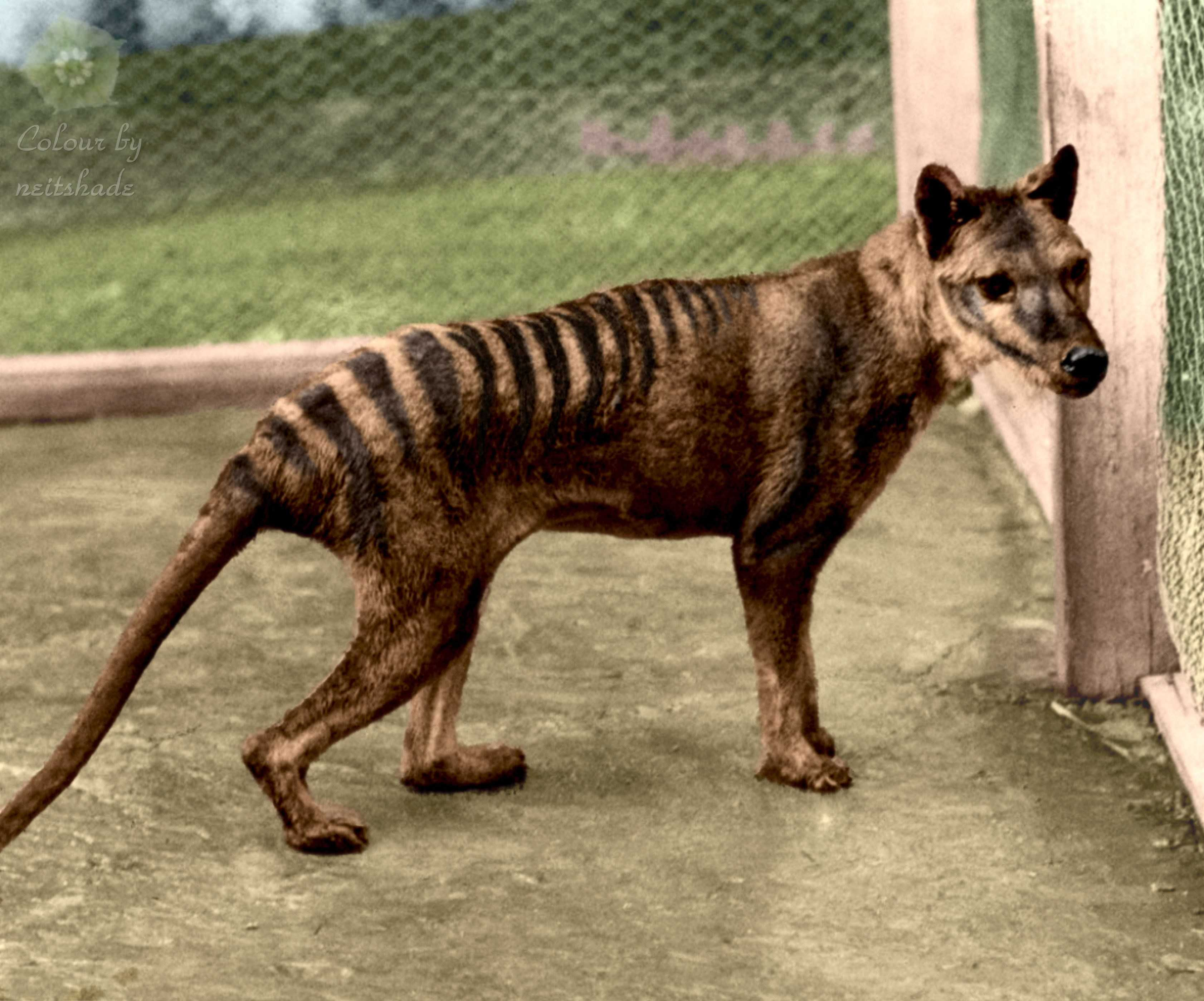 Gryphon Gazette | Extinct by Humans